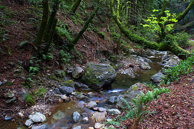 Photograph - Corte Madera Creek On Mt Tamalpais by Ben Upham III