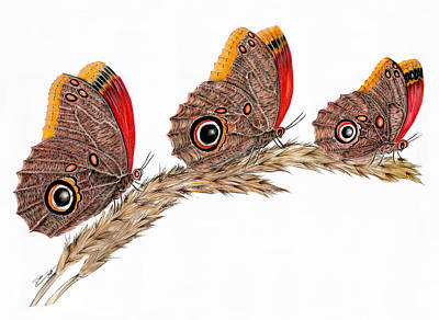 Butterfly Painting - Corujao Butterflies by Dulce Pagotto