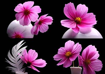Cosmea Photograph - Cosmea-collage by Manfred Lutzius