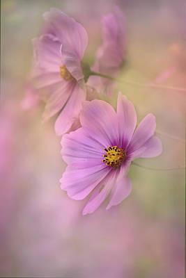 Photograph - Cosmic Pink by Ann Bridges
