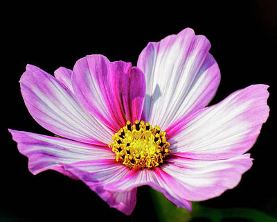Photograph - Cosmo -01 by Rob Graham