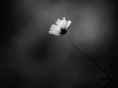 Photograph - Cosmo Alone by Bob Orsillo
