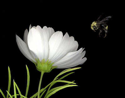 Cosmo And Bee Art Print by Sandi F Hutchins