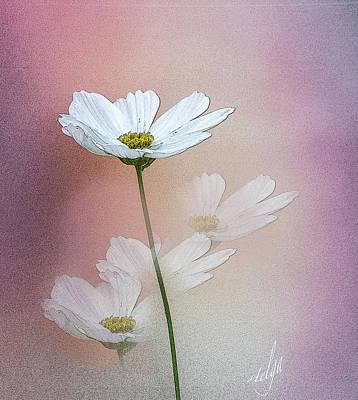 Digital Art - Cosmo by Helga Skinner