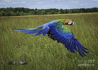 Cosmo In Flight Art Print