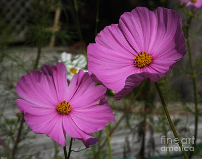 Photograph - Cosmo Twins by Lizi Beard-Ward