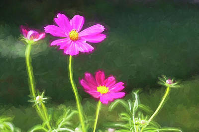 Photograph - Cosmos Beauties Coreopsideae 001 by Rich Franco