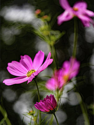 Photograph - Cosmos by Bob Orsillo