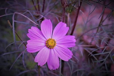 Photograph - Cosmos Complexion by Khalid Saeed