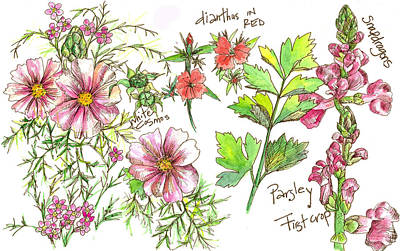 Painting - Cosmos Flower Nature Page  by Cathie Richardson