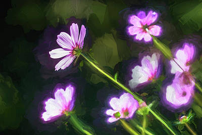 Photograph - Cosmos Flowers Coreopsideae 003 by Rich Franco