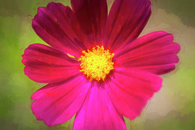 Photograph - Cosmos Flowers Coreopsideae by Rich Franco