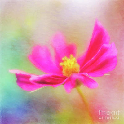 Photograph - Cosmos Flowers Love To Dance by Anita Pollak
