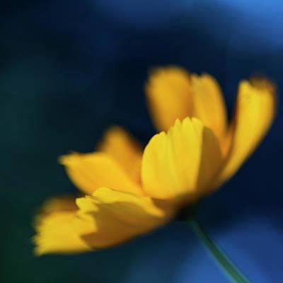 Photograph - Cosmos Impressions by Vishwanath Bhat