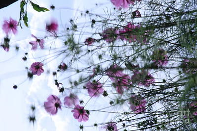 Photograph - Cosmos Number  Four by Brian Boyle