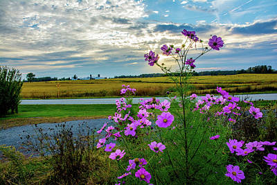 Photograph - Cosmos On The Farm by Randall Branham