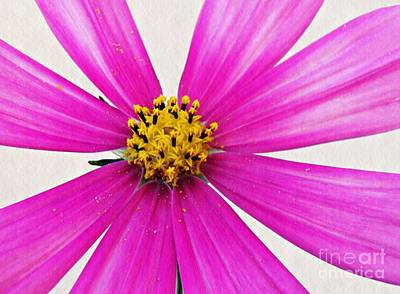 Photograph - Cosmos by Sarah Loft