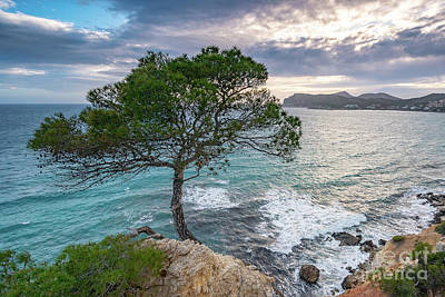 Photograph - Costa De La Calma Tree by Hans- Juergen Leschmann
