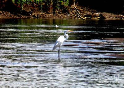 Photograph - Costa Rica Birds 3 by Randall Weidner