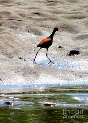 Photograph - Costa Rica Birds 4 by Randall Weidner