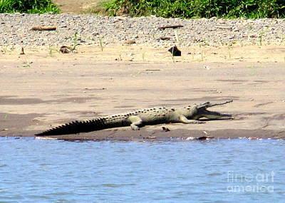 Photograph - Costa Rica Crocodile 2 by Randall Weidner