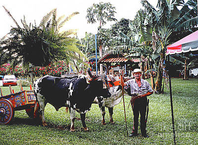 Photograph - Costa Rican Ox-cart by Merton Allen