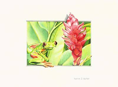 Drawing - Costa Rican Red-eyed Green Leaf Frog by Karrie J Butler