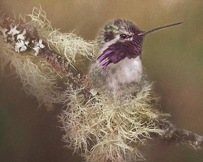 Birds Rights Managed Images - Costas Hummingbird Painted Royalty-Free Image by Teresa Wilson