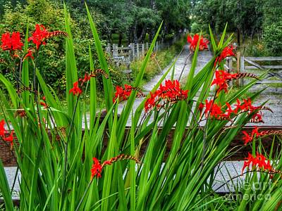 Photograph - Cottage Garden Red Flames  by Joan-Violet Stretch