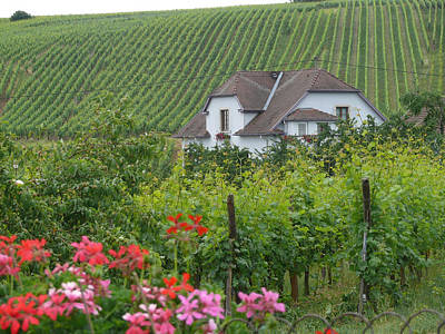 Photograph - Cottage On The Alsace Wine Road by John Bushnell