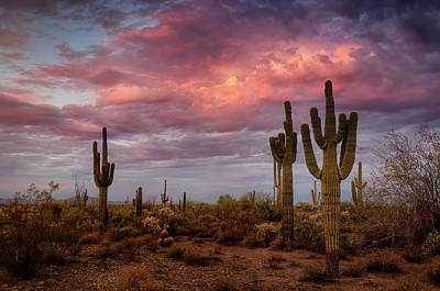 Photograph - Cotton Candy Pink Sonoran Sunrise  by Saija Lehtonen
