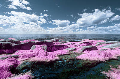 Photograph - Cotton Candy Seaweed by Brian Hale