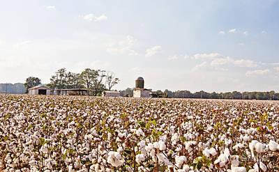 Cotton Crop Art Print by Scott Pellegrin