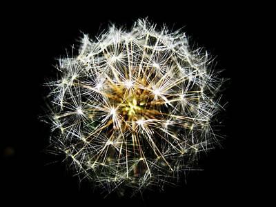White Fireworks Photograph - Cotton Dandy by Toni Jackson