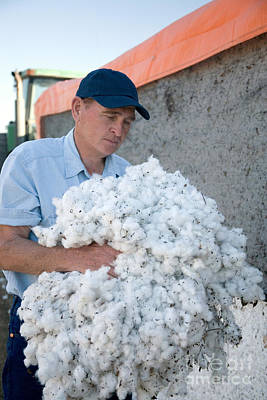 Cotton Boll Photograph - Cotton Farmer by Inga Spence