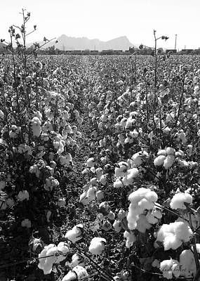 Photograph - Cotton Field 2 by Robert and Kume Bryant
