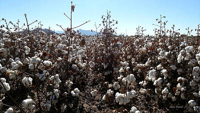 Photograph - Cotton Field 6 by Robert and Kume Bryant