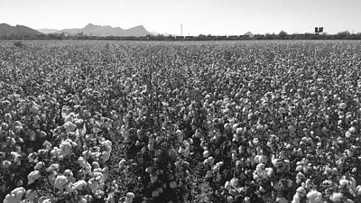 Photograph - Cotton Field 9 by Robert and Kume Bryant