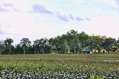 Photograph - Cotton Field In Georgia by Jan Amiss Photography