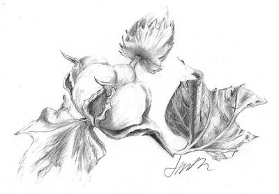 Drawing - Cotton Harvest by Jacki Kellum