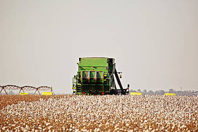 Cotton Harvest Art Print by Scott Pellegrin