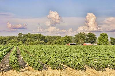 Photograph - Cotton Hasn't Flowered Yet by Jan Amiss Photography