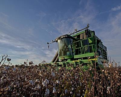 Photograph - Cotton Pickin by David Zarecor
