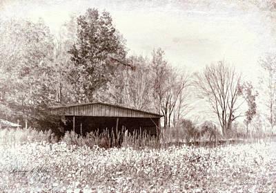 Photograph - Cotton Pickin'time by Bonnie Willis