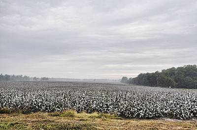 Photograph - Cotton Under The Mist by Jan Amiss Photography
