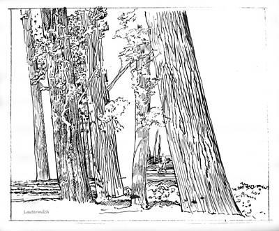 Creve Coeur Park Drawing - Cotton Woods Creve Coeur Path by John Lautermilch