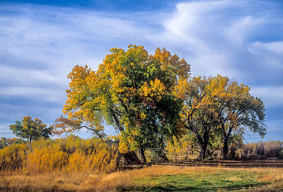 Photograph - Cottonwood #1 Tree On Ranch Land In Colorado Fall Colors by John Brink