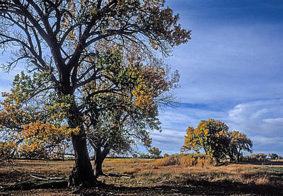 Photograph - Cottonwood #5 Fall Ranch Colorado Blue Sky by John Brink