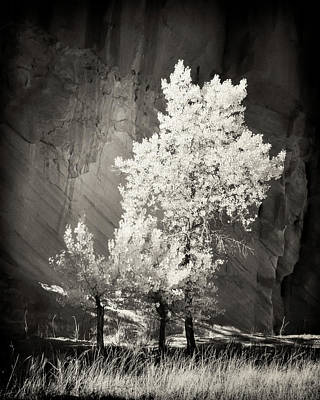 Capitol Reef Photograph - Cottonwood And Canyon Wall by Joseph Smith