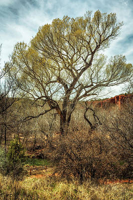 Photograph - Cottonwood By Oak Creek by Belinda Greb